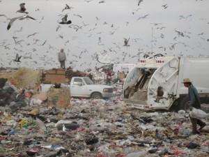 DumpSeagulls