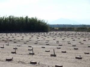 Unidentified Migrant Graves