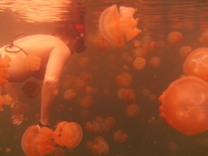 Katie Arnoldi Jellyfish Lake