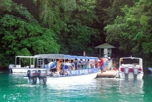 Busy Dock Jellyfish Lake