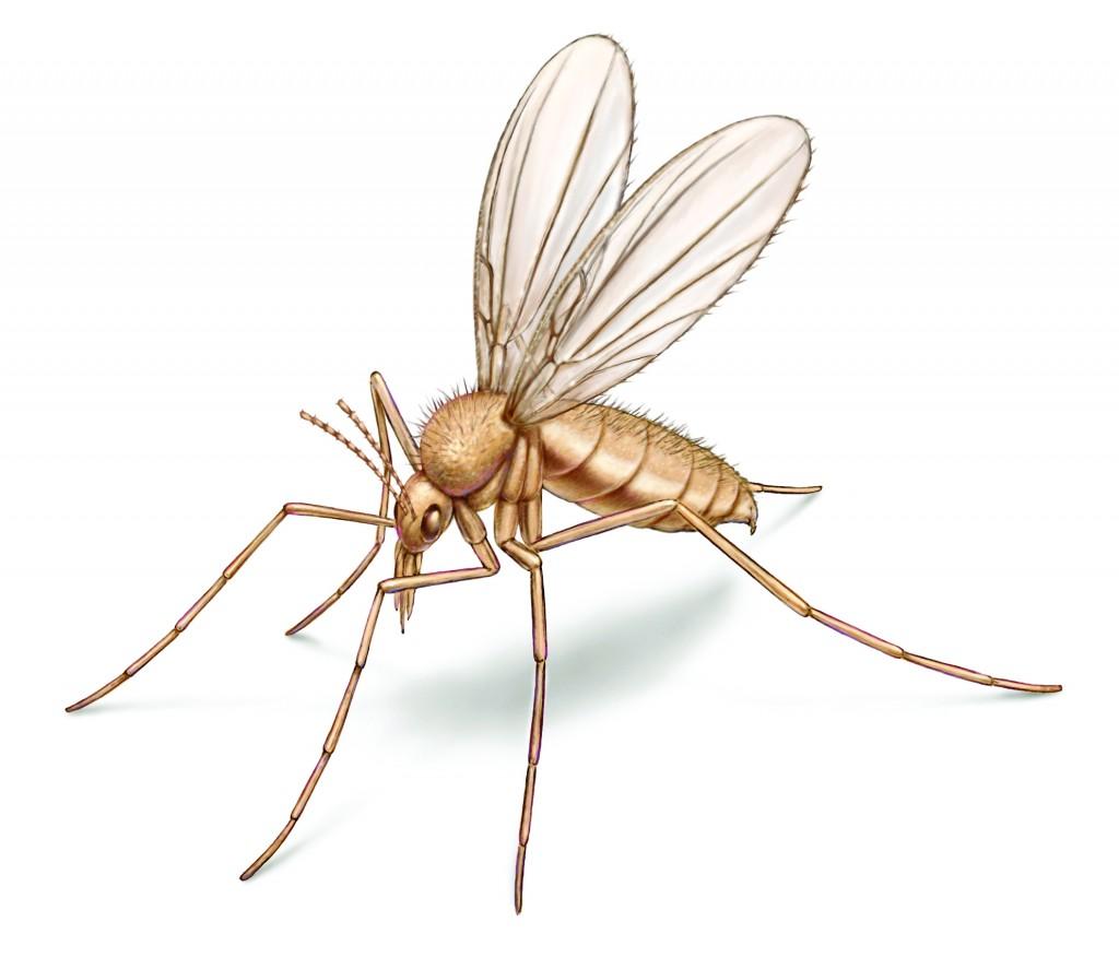 sand-fly-illustration_1984x1720